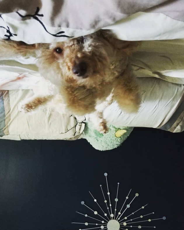 19 dogs who are actually just furry balloons