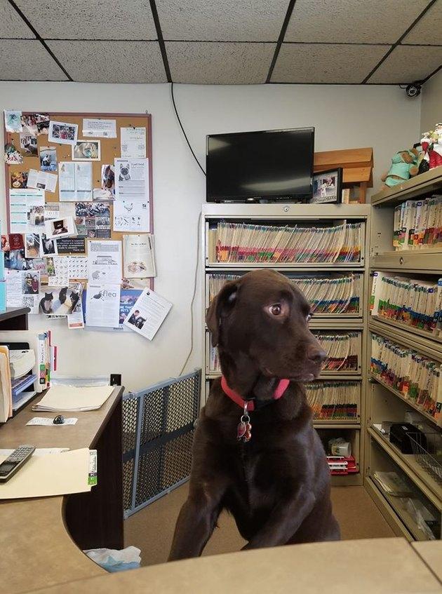 dog at receptionist desk
