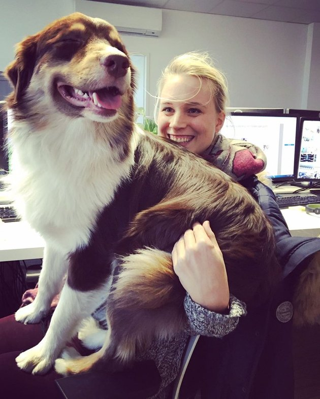 dog on woman's lap in office