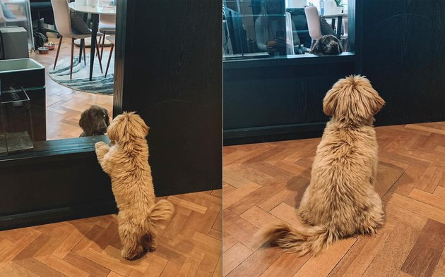 dogs stare at each other through door