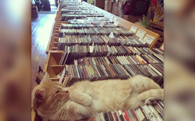 32 Laziest Cats The World Has Ever Seen