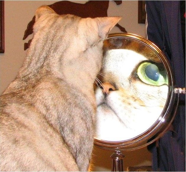 Derpy cat studies reflection in mirror