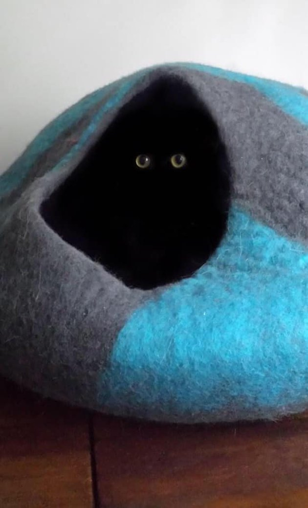 Black cat peers out of cat tent