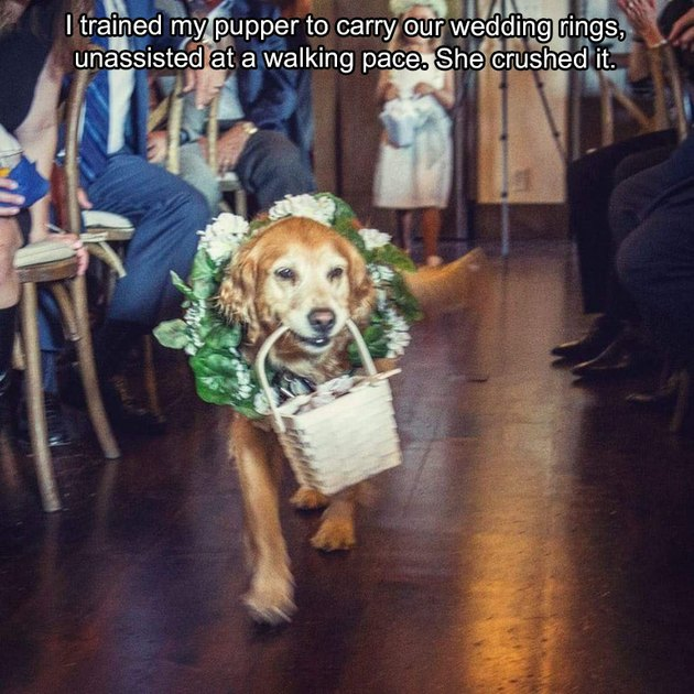 Dog carrying basket with wedding rings down the aisle.