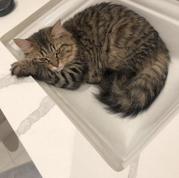 striped cat inside sink