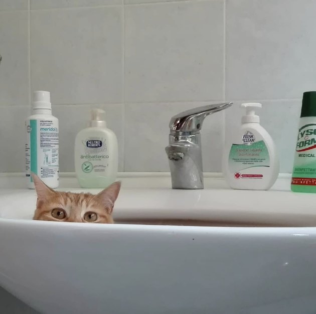 cat's eyes visible over sink rim