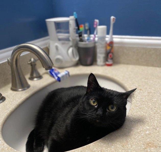 black cat inside sink