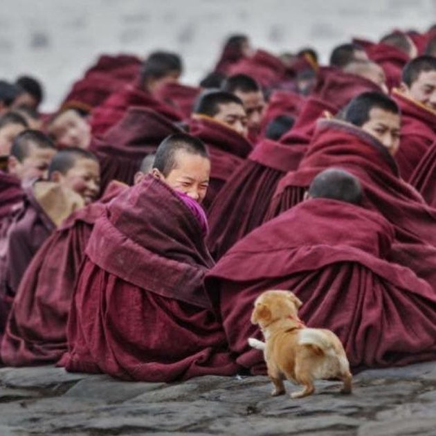Dog approaching group of monks.
