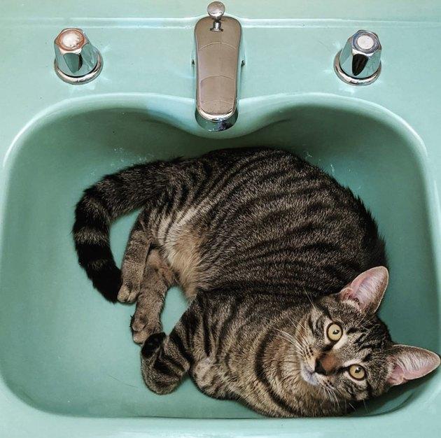 cat in aqua colored sink
