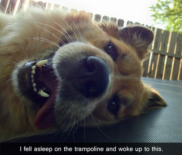 Dog lying on trampoline.