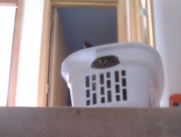 Cat hiding in laundry basket
