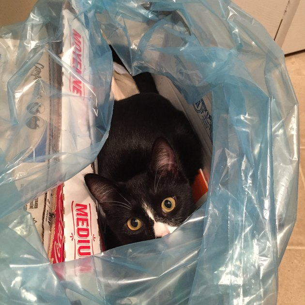 Cat sitting in plastic bag