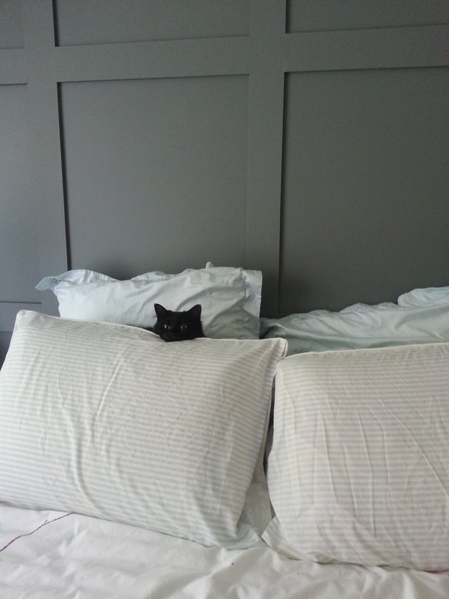 Black cat hiding behind white pillows