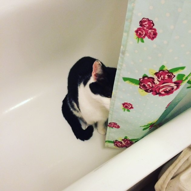 Cat hiding behind shower curtain