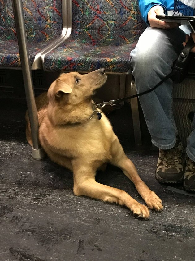 dog on train looks at owner in disbelief