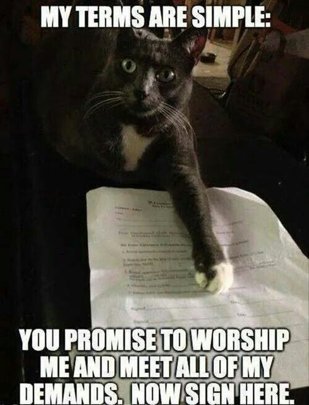Cat meme about a cat contract