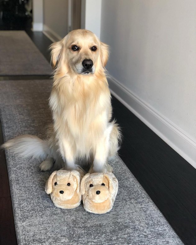 Dog wearing slippers that look like dogs