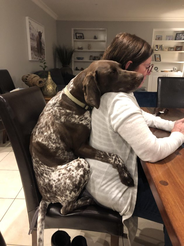 Dog sitting behind woman in chair at desk