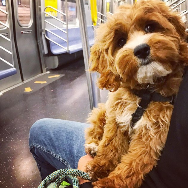 dog wants own seat on train