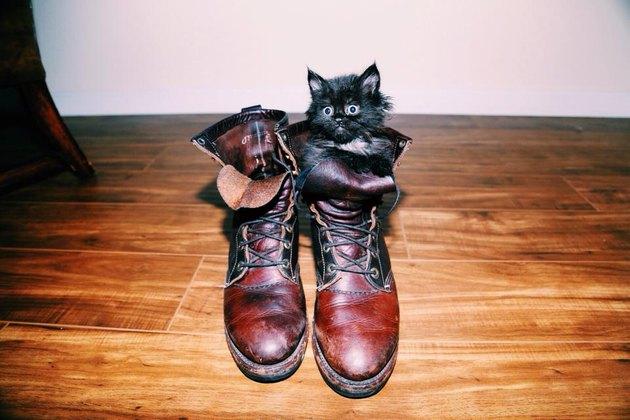 kitten hiding in a boot
