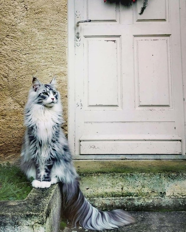 Cat with long tail posing