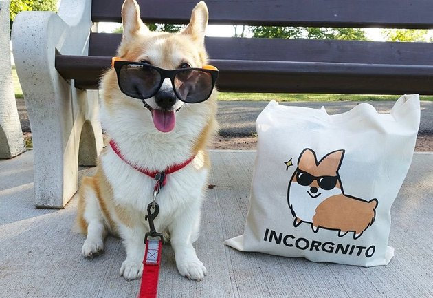 Corgi wearing sunglasses next to tote bag with drawing of corgi wearing sunglasses