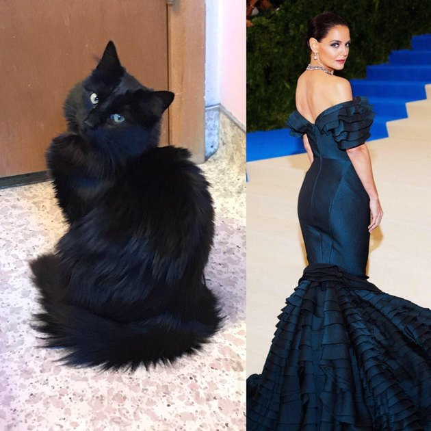 Cat posing next to picture of actress in evening gown