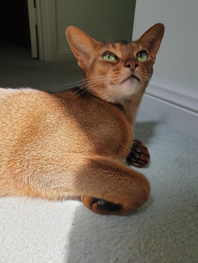 Cat with curled feet