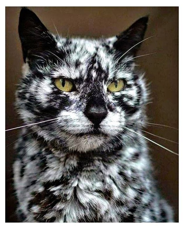 Cat with unusual black and white coloring