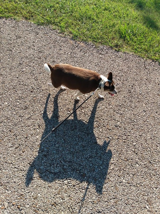 small dog with big shadow