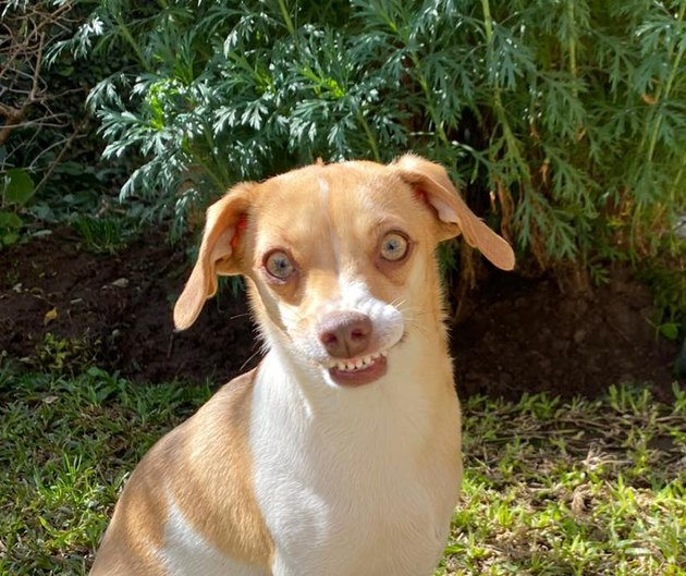 small dog with overbite