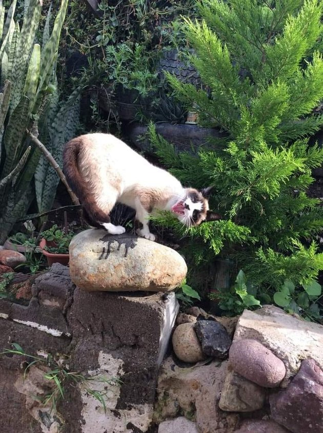 cat ruins photo by looking ridiculous standing on a rock