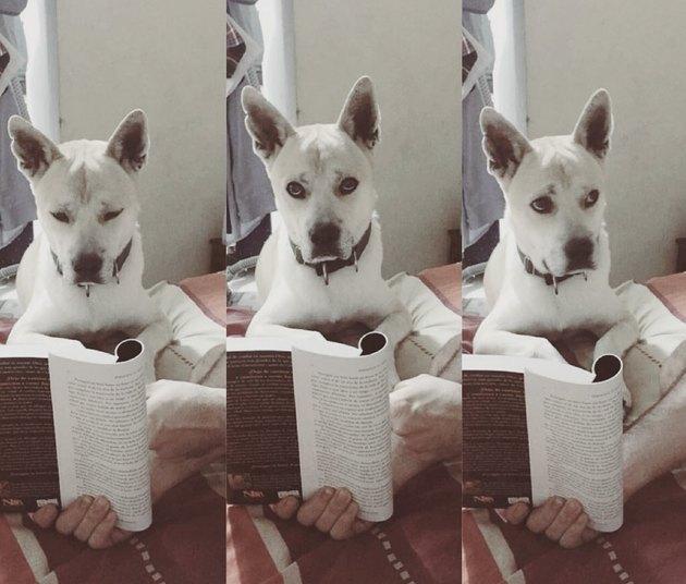 Dog reading book skeptically.
