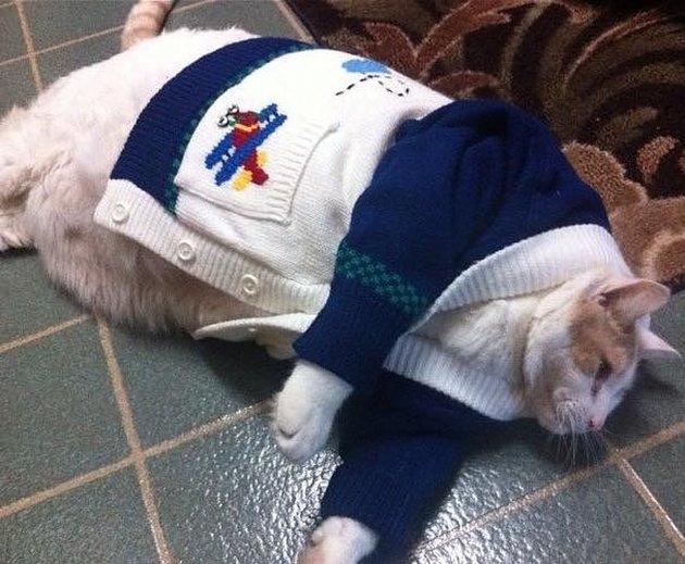 Fat cat in a sweater