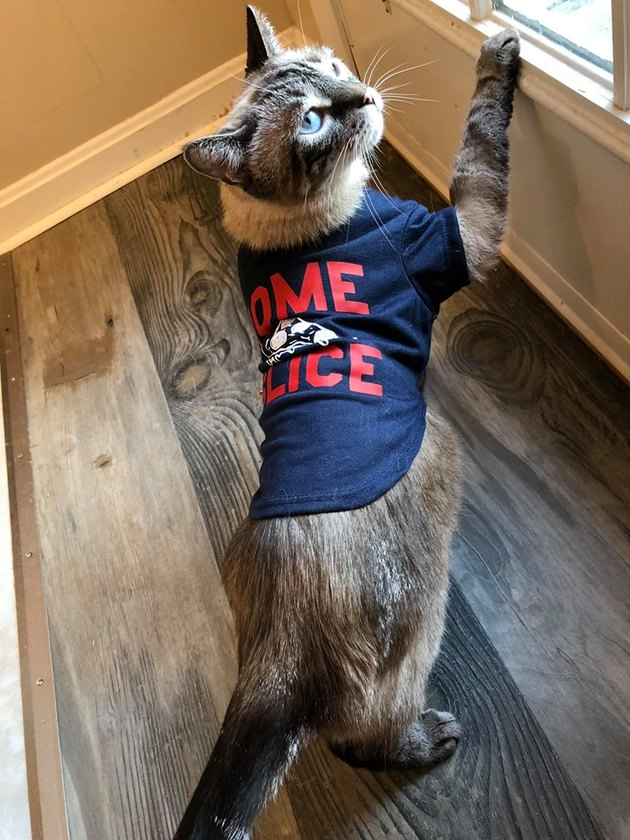 Cat in a shirt pawing at a door