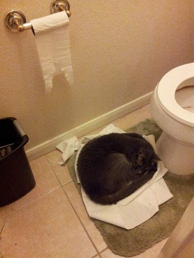Cat sleeping in bathroom on pile of toilet paper.