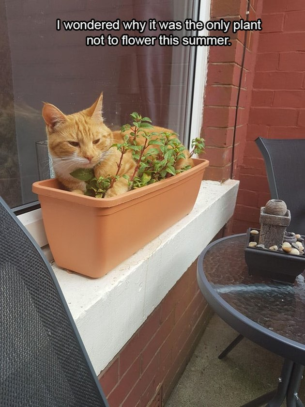 Cat sitting on potted plant.