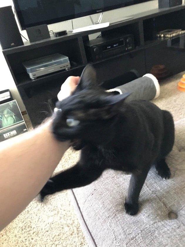 Cat biting human's arm.