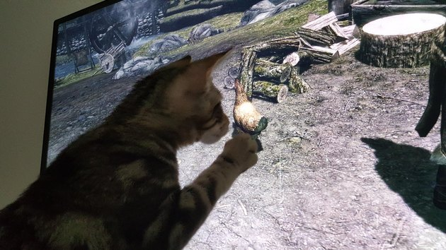 Kitten pawing at computer screen.