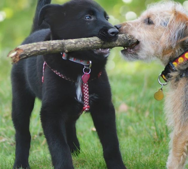 The branch manager and assistant to the branch manager meme is the purest dog meme on the internet