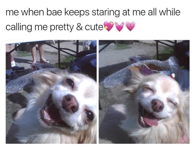 Dog getting complimented.