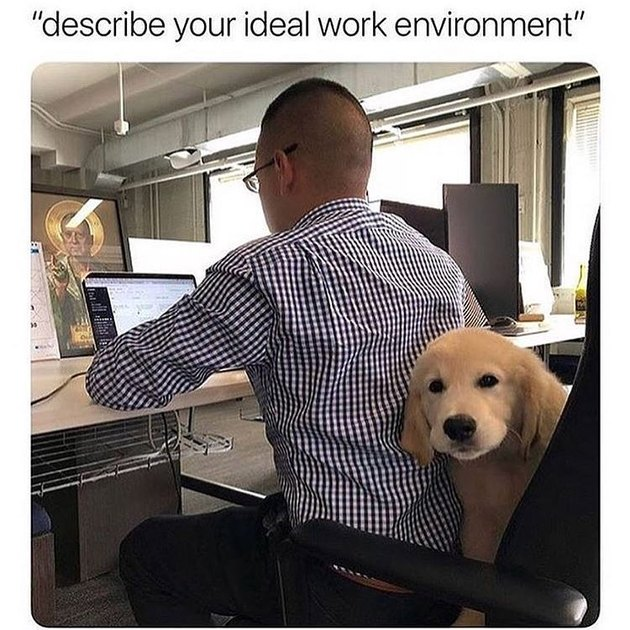 Office dog