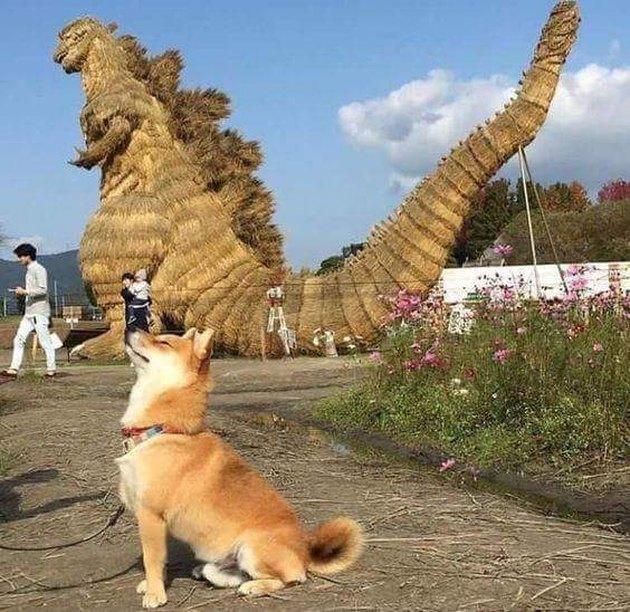 Shiba Inu posing next to Godzilla statue.