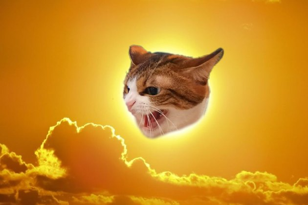 photoshopped cat is still angry