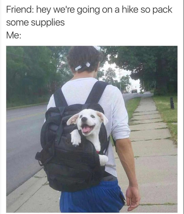 Puppy in backpack