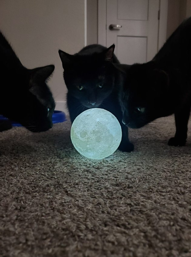 black cats gather around moon orb