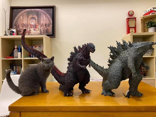 cat poses next to Godzilla toy