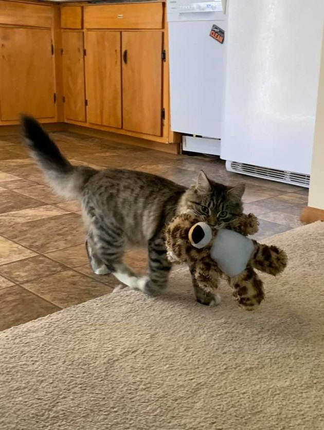 cat steals stuffed animal