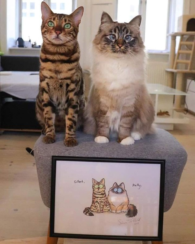 cats pose with illustrated portrait