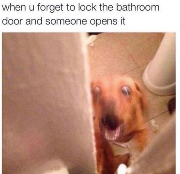 Blurry dog in bathroom.